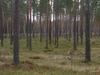 22. Tallinna Suusamaraton jääb lumepuuduse tõttu ära