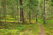 Veetka Ultra toob jooksusõpradeni Karula rahvuspargi varjatud aarded