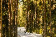 Tallinna suusamaratoni korraldustööd on täies hoos