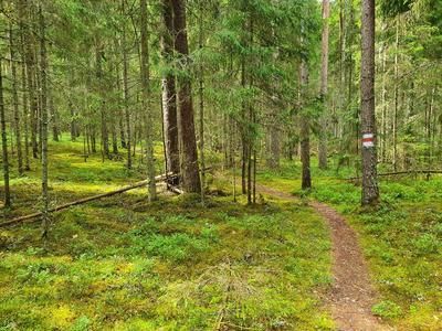 RMK matkarada Ähijärve lähedal, mida Veetka Ultra rada läbib